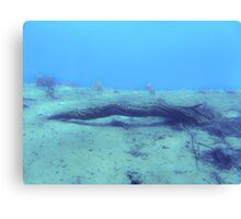 underwater twig Canvas Print