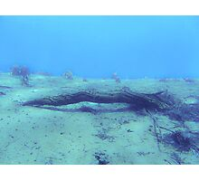 underwater twig Photographic Print