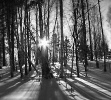 Sibirskaya Leis - Siberian Forest by Ben Smith