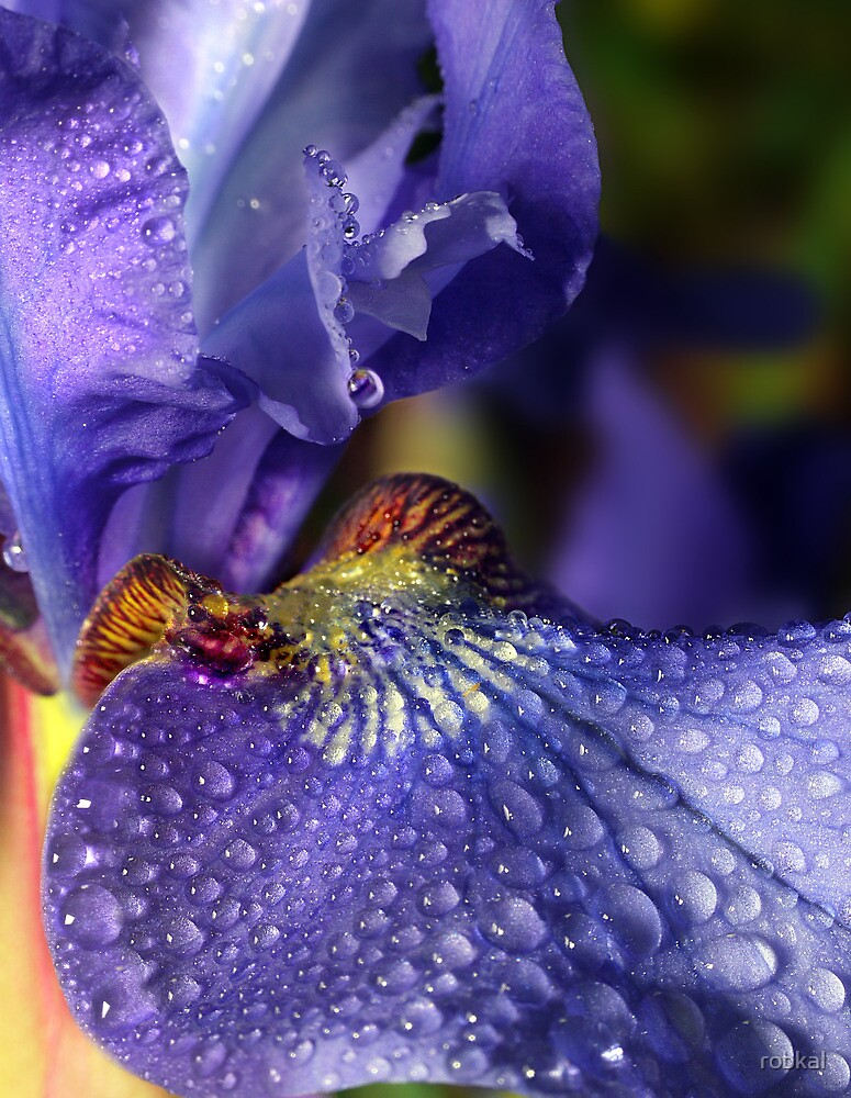 Iris Droplets ! by robkal