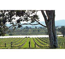 St Huberts Winery Photographic Print