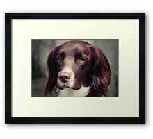 English Springer Spaniel Framed Print