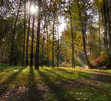 Fall's morning light by PrecisionFX