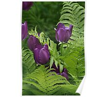 Tulips & Ferns Poster