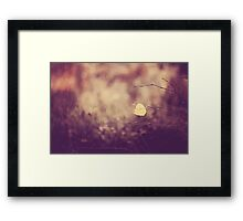 Last days of Autumn Framed Print