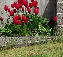 Tulips & Concrete by Honario