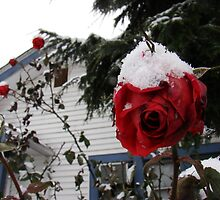 Roses in the Snow by Honario