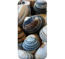 Seashells 2c iPhone Case/Skin