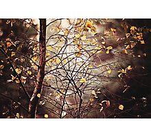 Last days of Autumn Photographic Print