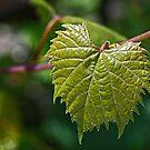 Sunny Leaf by Monnie Ryan