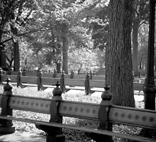 Benches of the Mall by Niek Broens
