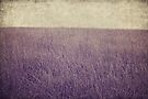 Purple field by Anne Staub