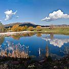 Old Pond by Valentina Gatewood