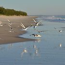 Morning Flight - Bribie Island by Barbara Burkhardt