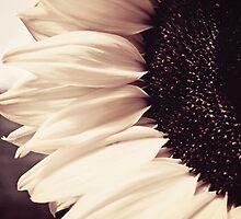 Sunflower by Anne Staub