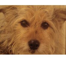Can I Show You My Best Side? Photographic Print
