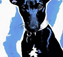 Whippet in blue by Alex & Louise Martin