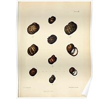 Conchologia indica Sylvanus Charles Horp Hanly and William Theobald 1876 Plate 0121 Poster