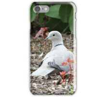 Dove Searching In Foliage iPhone Case/Skin