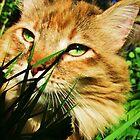 Emerald Eyes by Thomas Stevens