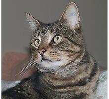Jimmy-my Tabby Cat Photographic Print