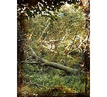 when a tree falls in the forest does it make a sound ? Photographic Print