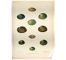 Conchologia indica Sylvanus Charles Horp Hanly and William Theobald 1876 Plate 0045 Poster
