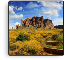 The golden fields of Flatiron Canvas Print