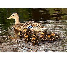 Mom Duck & Ten Ducklings Photographic Print