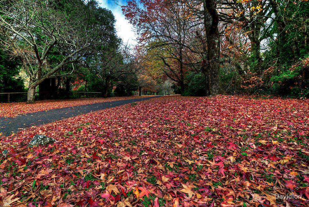 Mt Mount Wilson   NSW   The Blue Mountains   Australia   Autumn Wonderland by DavidIori