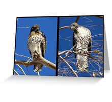 Redtailed Hawks ~ Final Goodbye Greeting Card