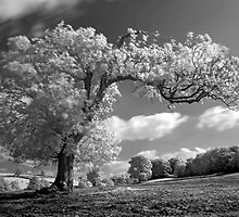 A Tree Blows in the Wind by JonDelorme