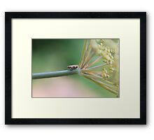 Froghopper Hops onto the Fennel Framed Print