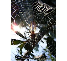 Caught in her web Photographic Print