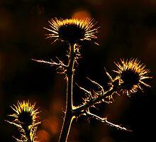 Light It Up by Bob Larson
