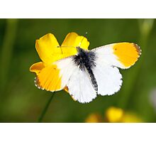 Open wings Photographic Print
