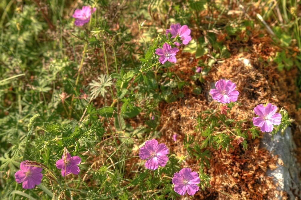 Beautiful Burren Flowers by John Quinn
