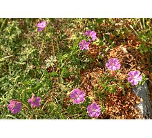 Beautiful Burren Flowers Photographic Print