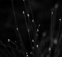Morning dew by Suellen Cook