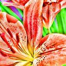 Orange Lily by Karen Duffy