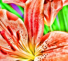 Orange Lily by Karen Duffy