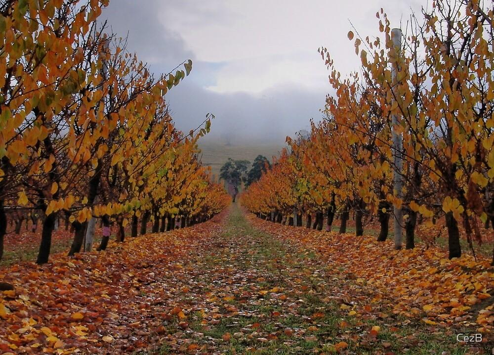 Autumn Apricots by CezB