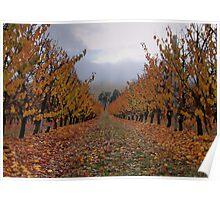 Autumn Apricots Poster