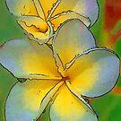 Frangipani by Karen Duffy