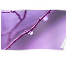 Lilac Zen  Poster
