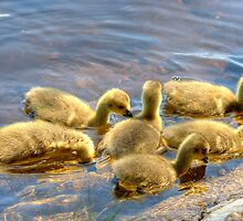 The Happy Family.. by Jamie  Green
