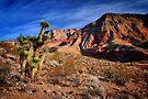 Arizona Wilderness by Jo Nijenhuis