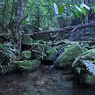 Coachwood Glen - Megalong Valley NSW Australia by Bev Woodman