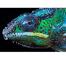 Chameleon in profile Photographic Print