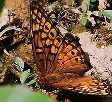 Butterfly Smooth by Terra 'Sunshine' Gilbert